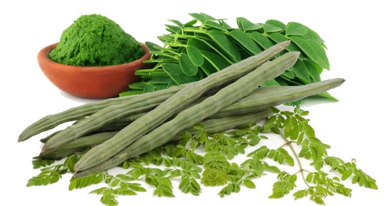 moringa-tree-leaves-meticore